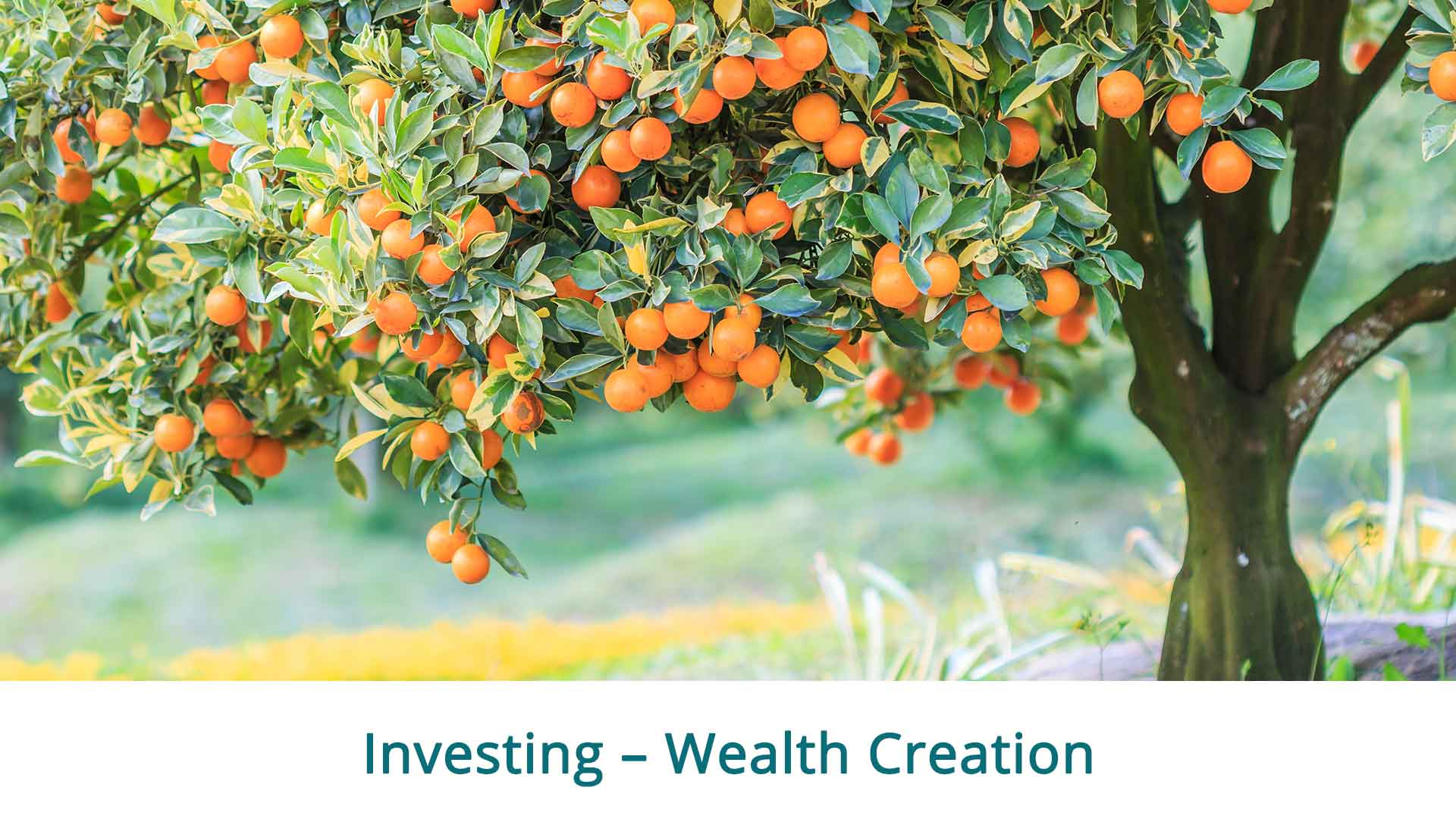 Murray-Mallee-Financial-Planning-Advice-1.0-Investing-Wealth-Creation